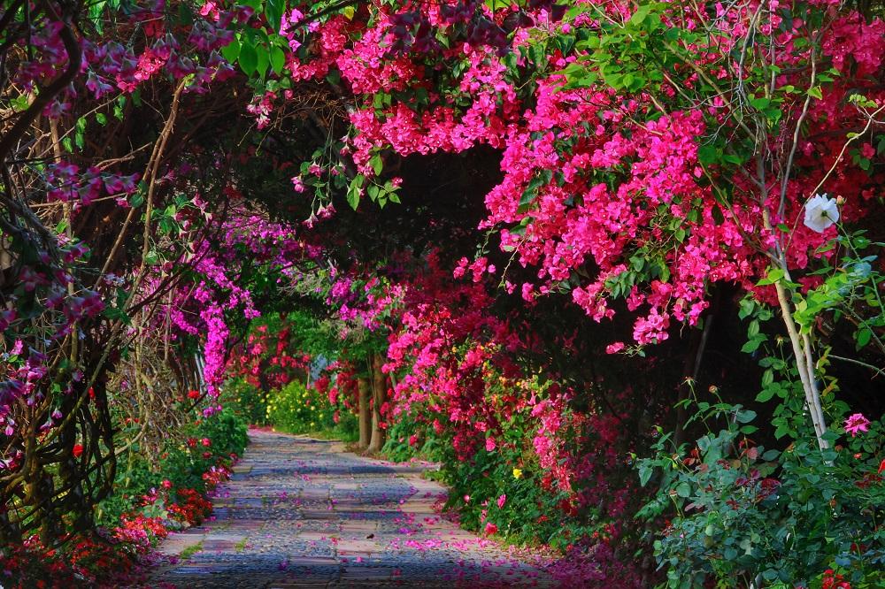 Baoqu Rose World