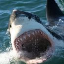 Shark Cage Diving Tour with Private Transfers between Cape Town and Gansbaai