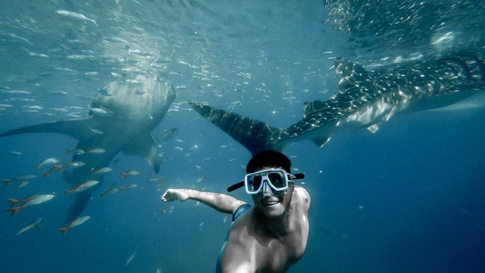 Kawasan Falls and Whaleshark Watching with Snorkeling Shared Tour for Foreigners