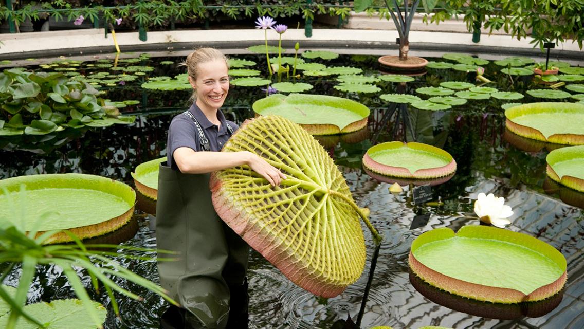 Royal Botanic Gardens Kew Ticket