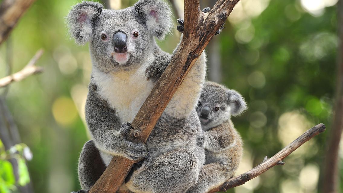 Wildlife Sydney Ticket