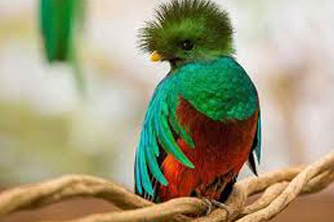Tour to the Curricancha Reserve in Monteverde, a paradise for birdwatchers from San José