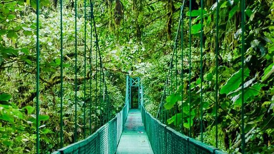 Selvatura Park Hanging Bridge Canopy Tour in Monteverde