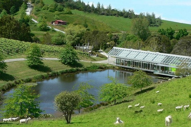 East Coast 'Matakana' Wine Tasting Day Tour from Auckland