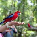 Springbrook National Park Discovery Full-Day Bushwalking Tour