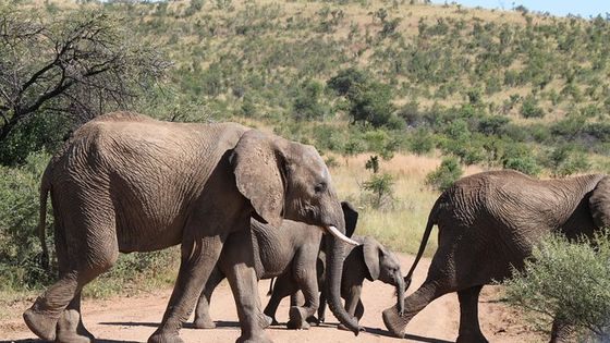One day Safari to Pilanesberg including a 5 Hour Open Safari Vehicle Drive