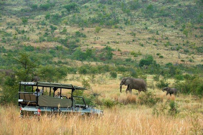 Full Day Open Vehicle Safari Pilanesberg National Park