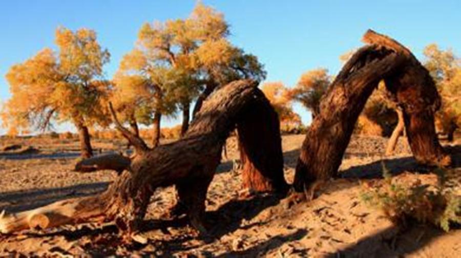 達瓦昆沙漠旅遊風景區