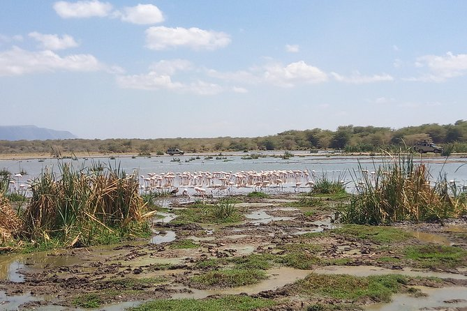 6 Days Tarangire- Manyara- Serengeti National Parks and Ngorongoro