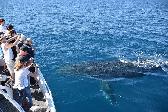 Mooloolaba Whale Watching Cruise