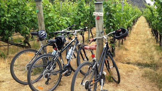Half-Day Self-Guided Ride and Wine Bike Tour from Arrowtown