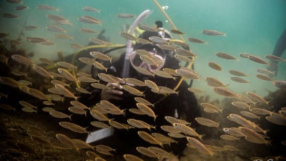 Half day Guided Dive Tour, Goat Island Marine Reserve