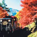The Sagano Romantic Train + Arashiyama + Kiyomizu Temple + Fushimi Inari Shrine Day Tour