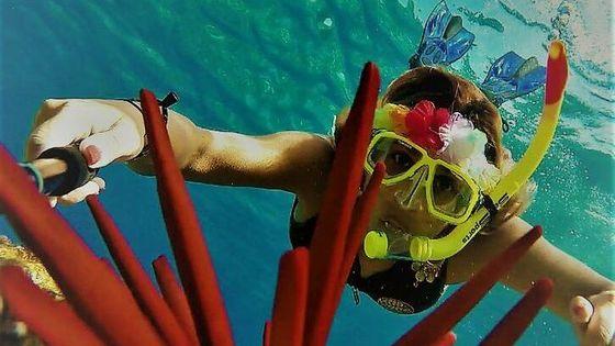 Molokini Crater Zodiak Adventure Snorkel & Turtle Cove Swim