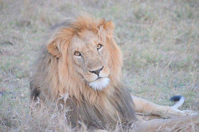 Half-Day Nairobi National Park Safari from Nairobi with Pickup