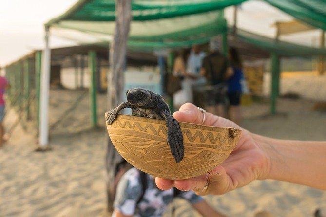 Sea Turtle Release in Puerto Escondido