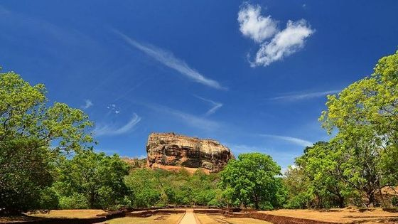 Tour to Dambulla Cave Temple, Sigiriya Rock & Minneriya National Park