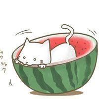 掉进西瓜的猫