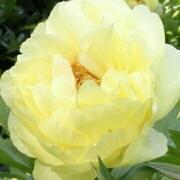 r春暖花开r