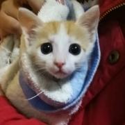 小小喵喵喵喵
