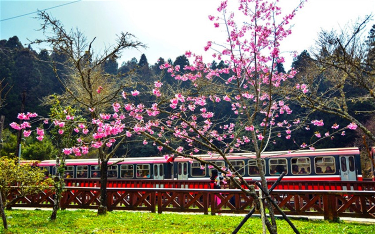 Alishan National Forest Recreation Area Ticket