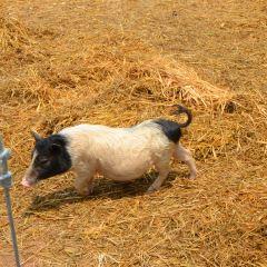 喜洋洋綿羊農場張用戶圖片