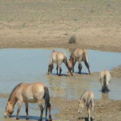 吉木薩爾縣野馬場用戶圖片