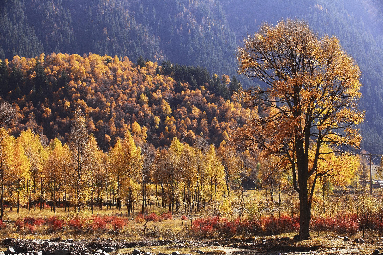 仙米國家森林公園