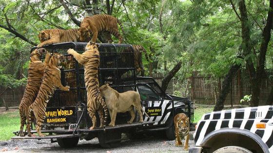 Bangkok Safari World Ticket