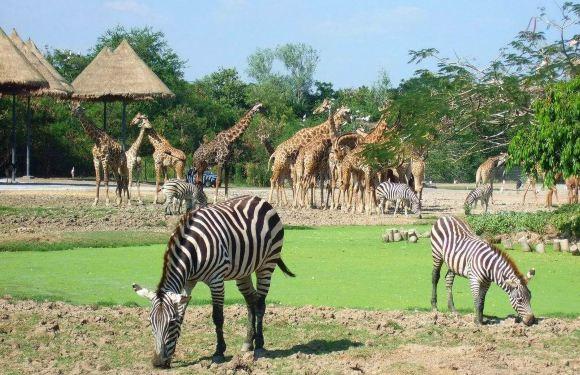 曼谷 Safari World 野生動物世界門票(可加選海洋公園)