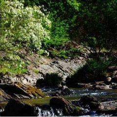 Lizi Forest Park User Photo
