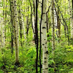 Changbai Mountain Wild Ginseng Ecological Park User Photo