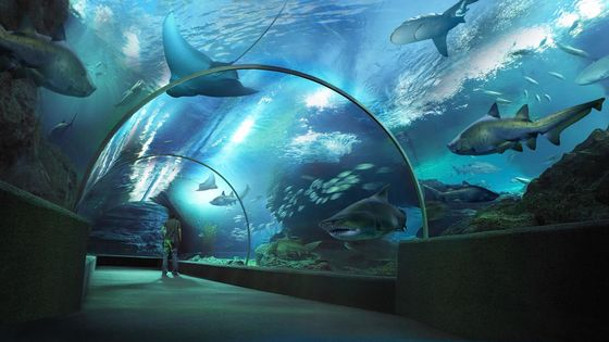 Special Price   Sea Life Bangkok Ocean World Ticket