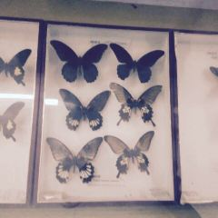 Ningbo Zhou Yao Insect Museum User Photo