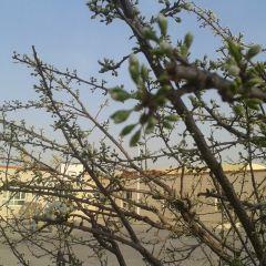 石河子墾區沙漠公園用戶圖片