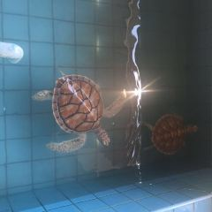 The turtle breeding center User Photo
