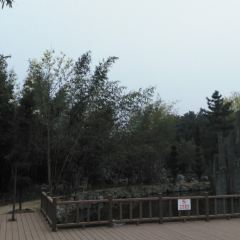 Lixin Martyrs' Cemetery User Photo