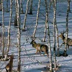 天山之夏狩獵場用戶圖片