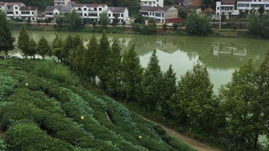 烏雲山茶葉公園