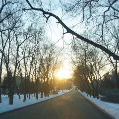 Changbai Mountain Maze User Photo