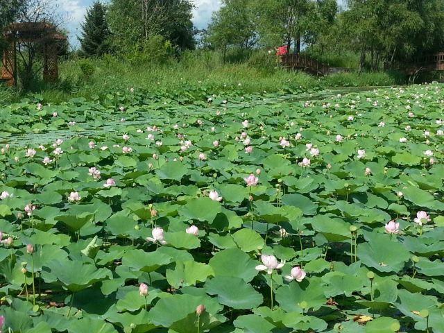 安邦河國家濕地公園
