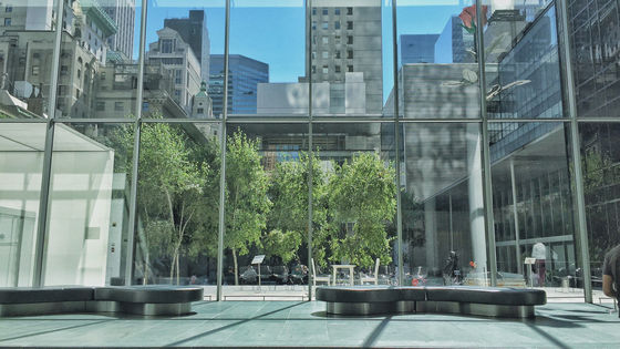 The Museum of Modern Art Ticket