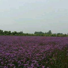 普羅旺斯薰衣草莊園用戶圖片