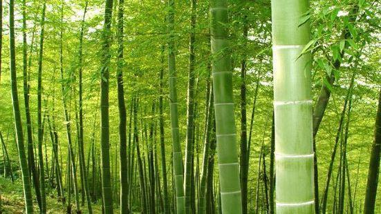 虎爪山國家森林公園