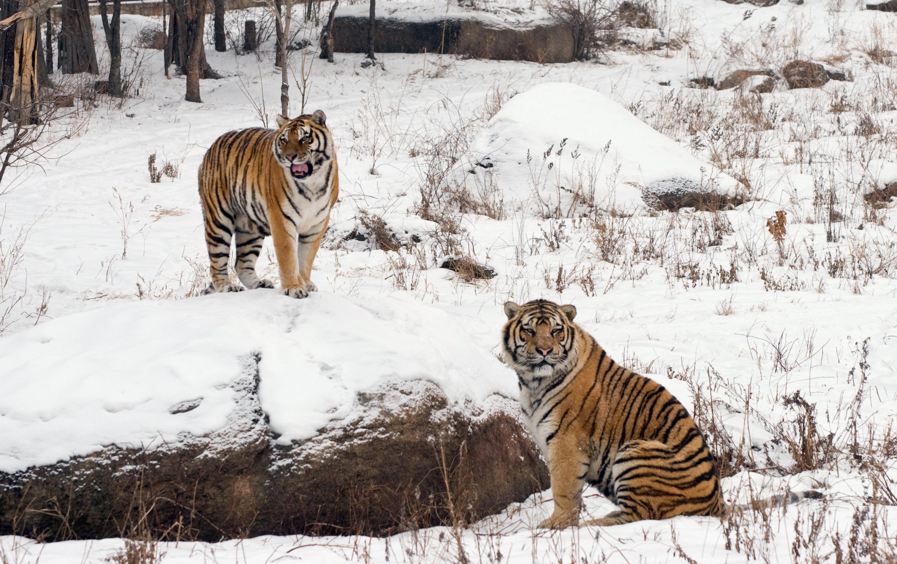 Northeast Tiger Forest Park Admission Ticket