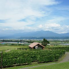 Furano Winery User Photo