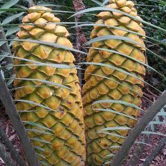 Los Angeles County Arboretum & Botanic Garden User Photo