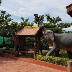 芭提雅大象村張用戶圖片