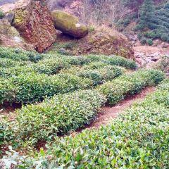 紅石谷風景區用戶圖片