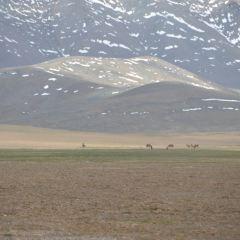 高山草甸帶用戶圖片